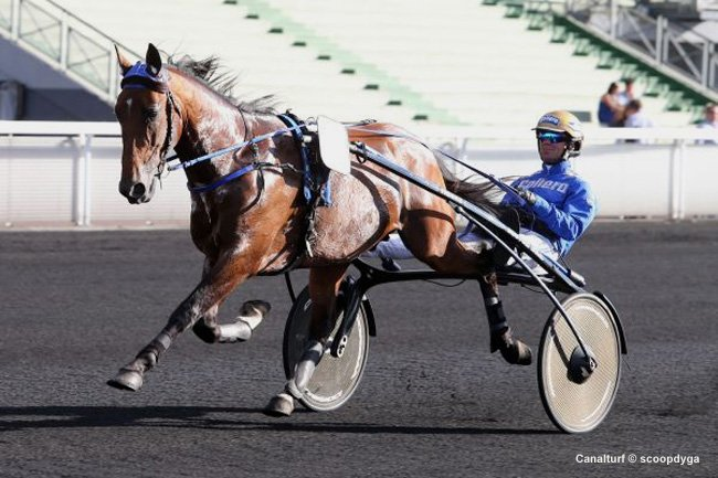timoko-10-oct-sur-le-sol-americain