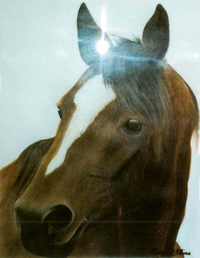21-cheval-baie-brun