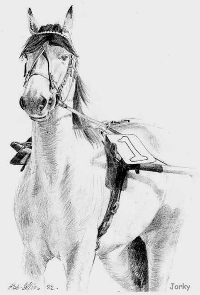 jorky-champion-trotteur