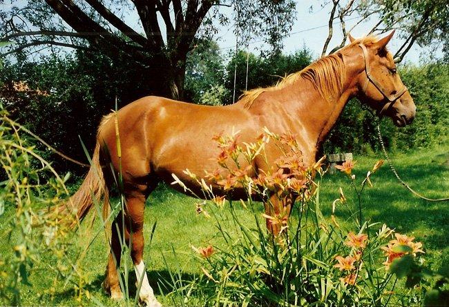 aldrine ou surprise Romaine dans la pelouse