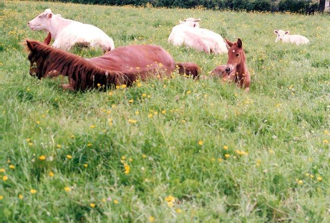 aldrine sa mère et les vaches