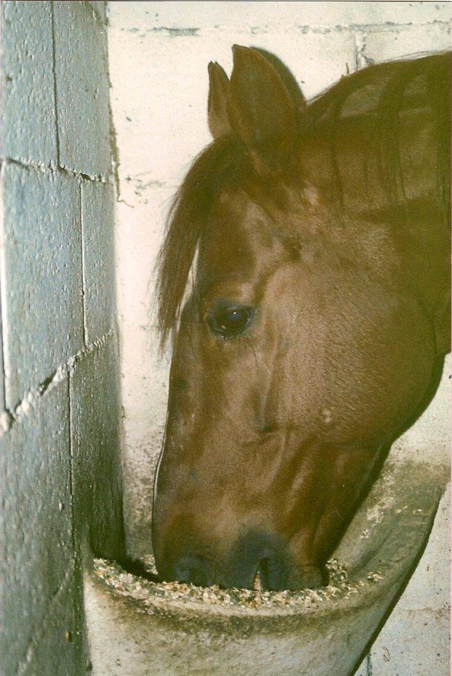 Katius du Jura dans mes boxes en 1987 02