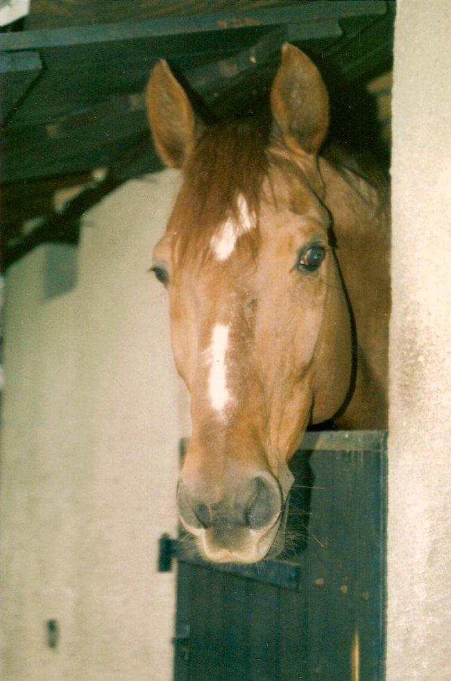 Katius du Jura dans mes boxes en 1987