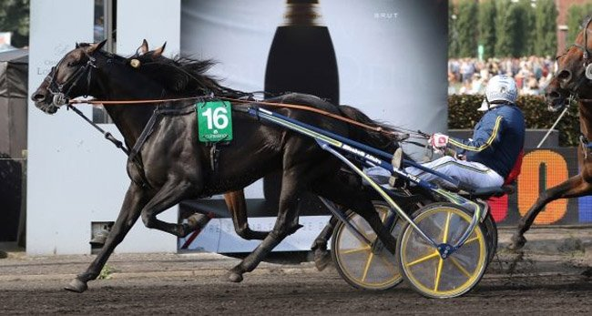 Waregem_Grand-Prix-de-Trot_Bird-Parker_5539-620x331