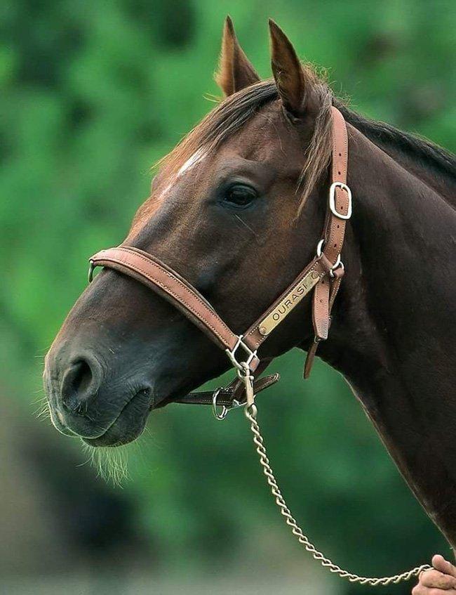 Ourasi né le 7 avril 1980 - 12 Janvier 2013 - 32 ans
