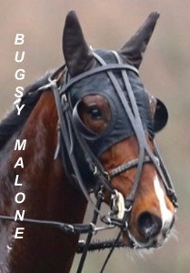 Bugsy Malone hongre de Ready Cash
