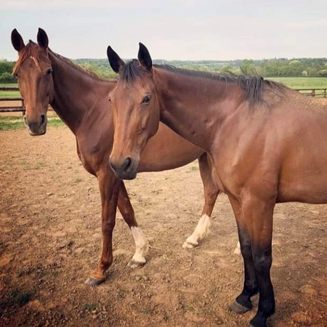 Bélina et Uza souhaitent une bonne reprise à leurs camarades de course